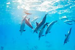 Dolphins swimming underwater Stock Photos