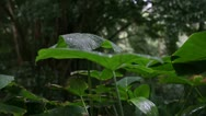 Dolly, Rain Forest, (Raining with Sound) Tropical Jungle Stock Footage