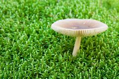 White toadstool in a moss. shallow dof Stock Photos