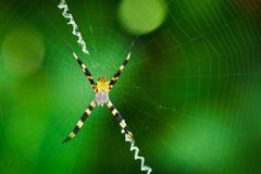 black and yellow spider - stock photo