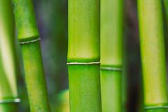 abstract zen bamboo - stock photo