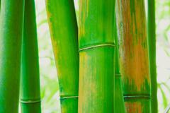 Abstract zen bamboo background Stock Photos
