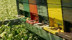 Bees on the field Stock Footage