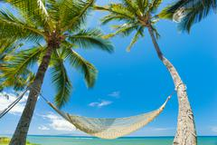 Tropical palm trees and hammock Stock Photos