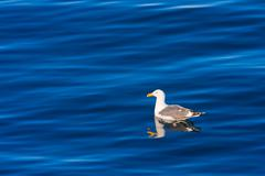 Seagull floating in the ocean Stock Photos