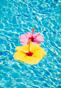 colorful flower floating in pool - stock photo