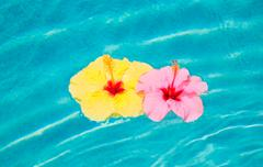 Colorful flower floating in pool Stock Photos