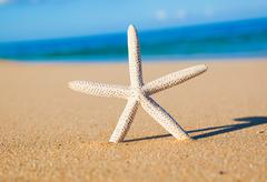 starfish, shell on the beach - stock photo