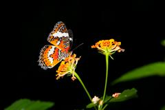 beautiful butterfly on colorful flower - stock photo