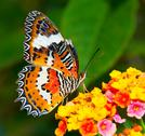Stock Photo of butterfly on colorful flower