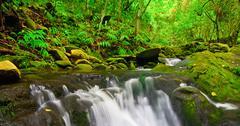 beautiful lush waterfall - stock photo