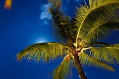 Tropical night sky, palm trees and moon Stock Photos