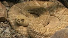 Rattlesnake Eye Zoom In Stock Footage