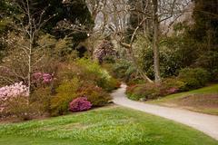 Garden path between shrubbery of azaleas Stock Photos