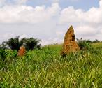 Termite mound in ghana west africa Stock Photos