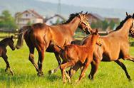 Horse nature Stock Photos