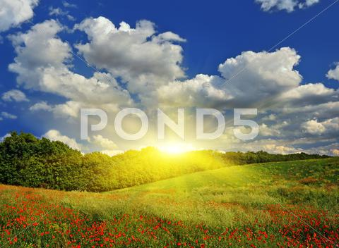 Stock photo of sunrise over a spring meadow with red poppies