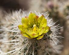 Barrel cactus plant in anza borrego desert Stock Photos