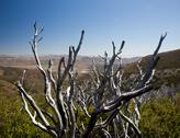 Stock Photo of dead twigs frame anza borrego state park
