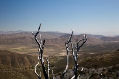 Dead twigs frame anza borrego state park Stock Photos