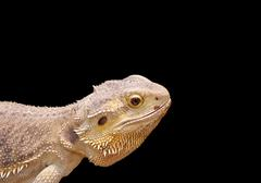 Reptile portrait - stock photo