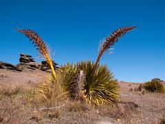 Strange grasses on new zealand plain Stock Photos
