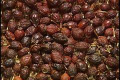 Hawthorn berries - stock footage