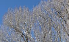 Tree in winter with bare branches .. Stock Photos