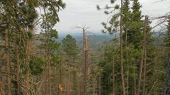Black Hills through the Trees Stock Footage