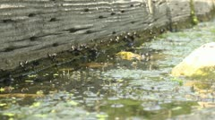 snails and bugs under log - stock footage