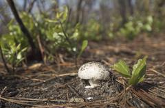 Small mushroom Stock Photos