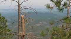 Black Hills through the Tree Stock Footage