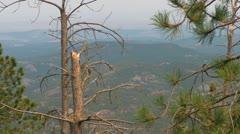 Black Hills through the Tree Stock Footage