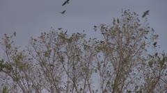 Beautiful crow rest tree branch leaf flock migration search season Stock Footage