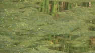 Swamp Stock Footage