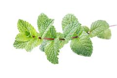 mint stem - stock photo