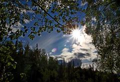 Sunburst through the trees Stock Photos