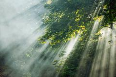mystical sunlight rays in trees - stock photo