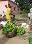 Stock Photo of indian woman in saree chooses fruit