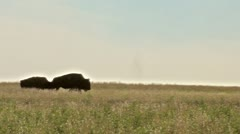 Following the Bison Stock Footage