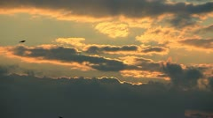 Flight birds silhouette on golden sky background Stock Footage