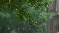 Rain with tree branch Stock Footage