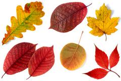 Fall leaf collection - stock photo