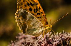 Stock Photo of Butterfly on a flower