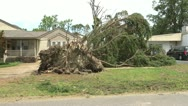 Stock Video Footage of tornado downed tree