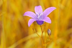 Stock Photo of purple flower