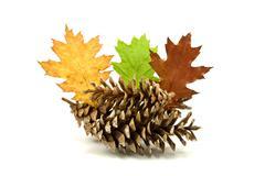 Stock Photo of autumnal decoration