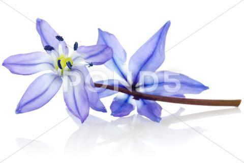 Stock photo of blue  flower with reflection