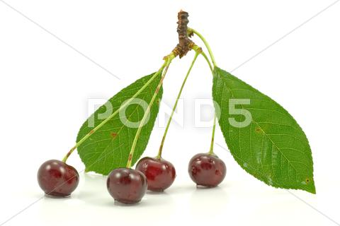 Stock photo of cherries on a white