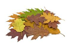 dirty fallen leaves - stock photo